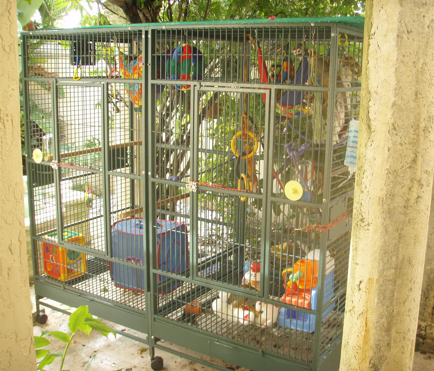 Kinkajou Cage Ideas Images & Pictures - Becuo
